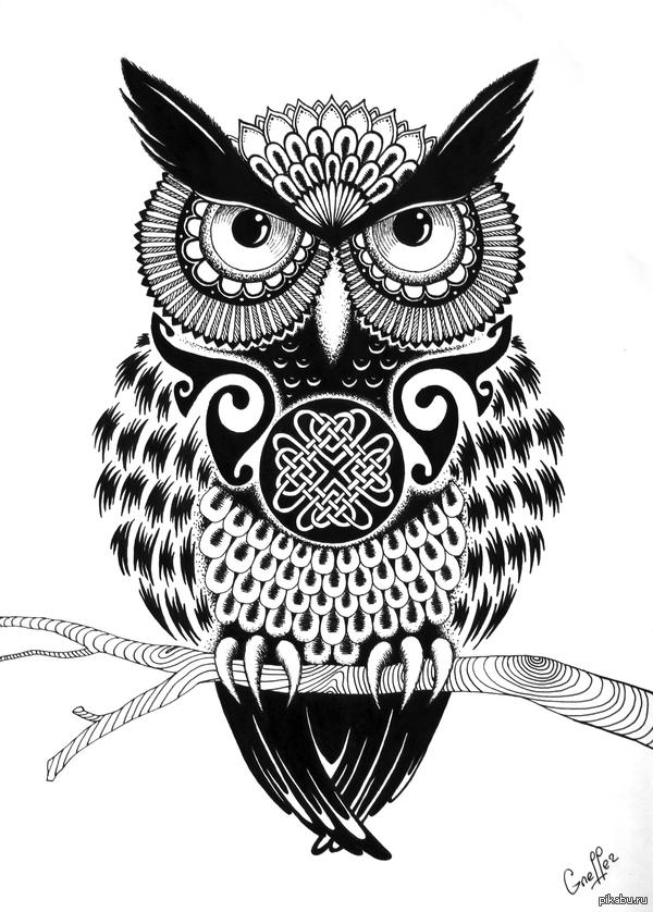 Нарисованная сова гелевой ручкой