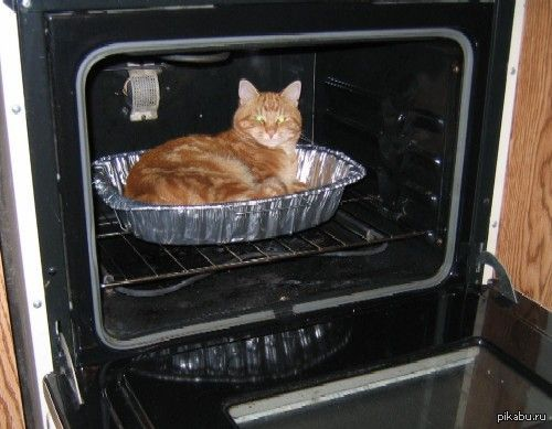 Sam96 83 дня назад кот духовка кот пирог