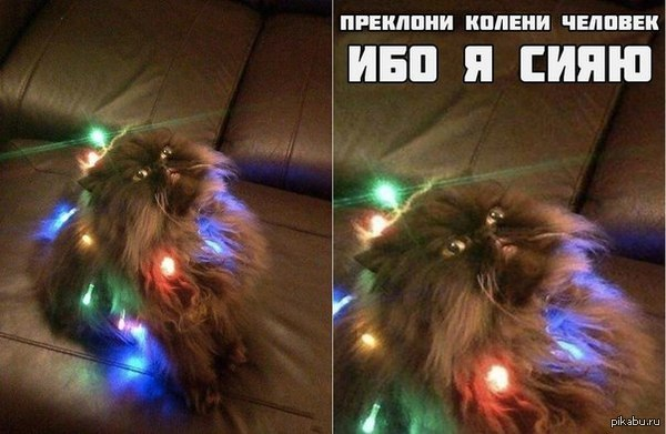 "Божество из паблика ""Котизм"")  кот, религия, Котизм, милота"