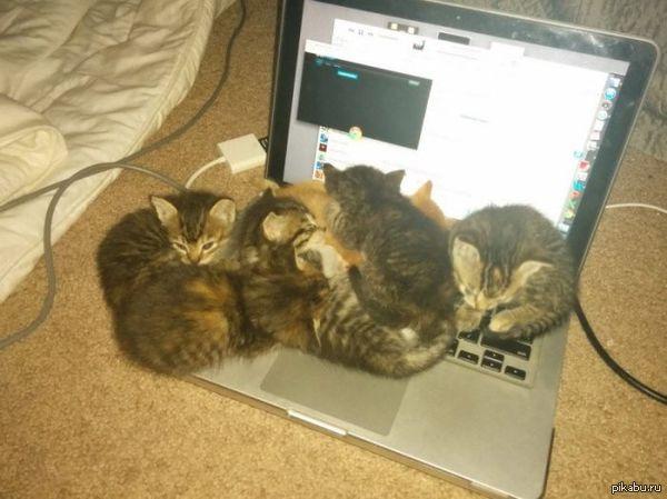 Люблю кошечек, а вы?   кот, Няшные котята
