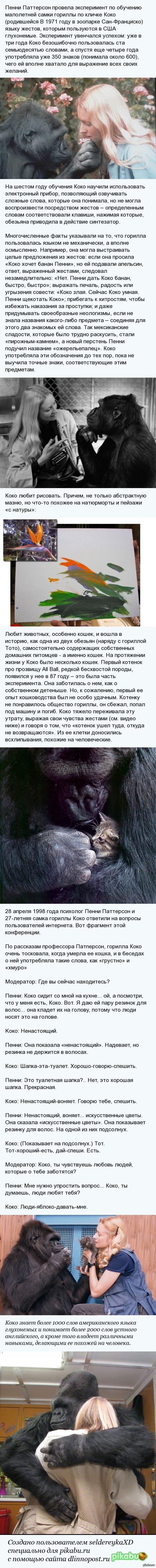 Горилла, которая умеет говорить   гориллы, приматы, язык жестов, длиннопост