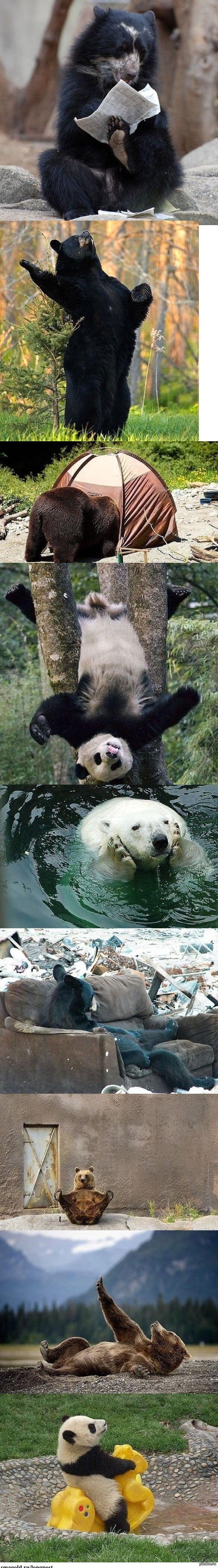 Медвежий досуг   Медведи, отдых, досуг, медвежий досуг, длиннопост