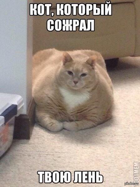 Ты все еще думаешь,что ты самый ленивый?   лень, кот, жирный, ленивый