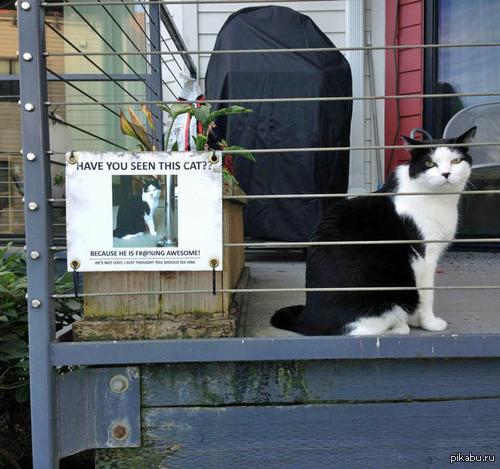 """""""Вы видели этого кота?""""   кот, не мое, объявление"""