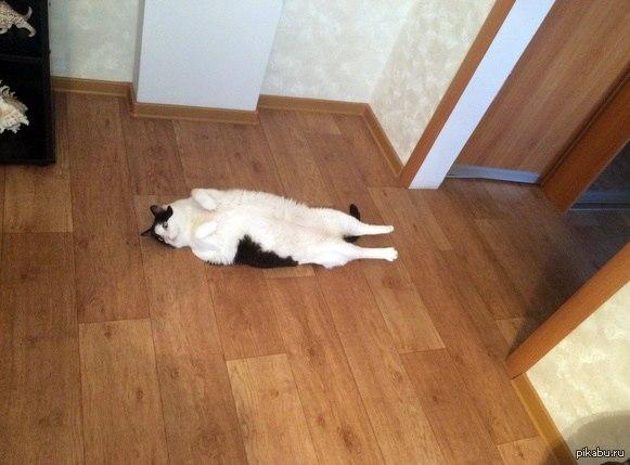 Домашний кот и прогулка