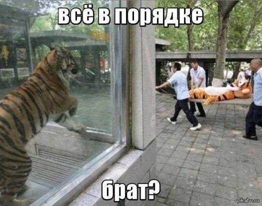 Все в порядке Брат?   брат, тигр