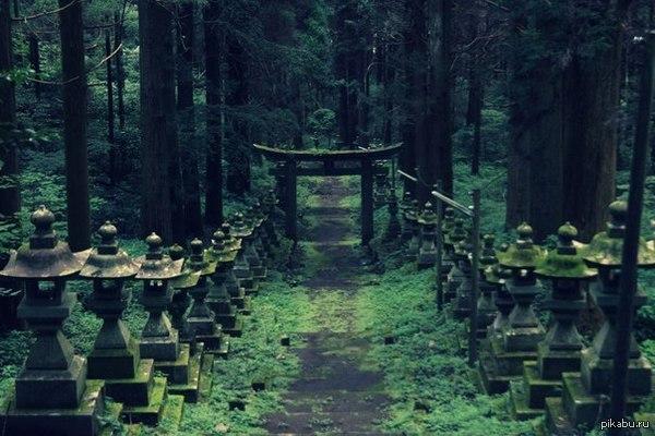 Лесной храм   лес, храм, красота