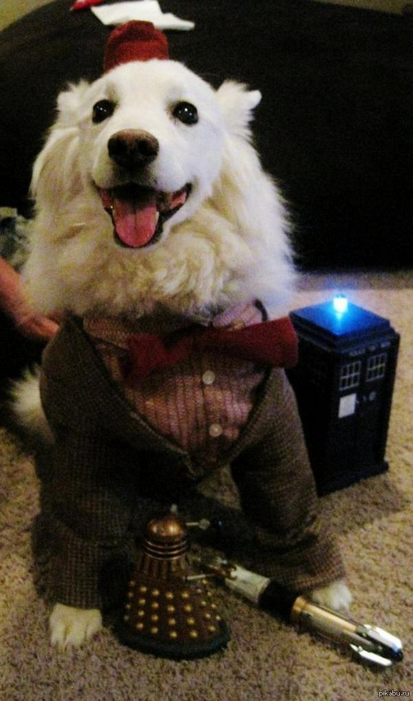 """Доктор Пёс В ожидании показа серии """"Внутрь Далека"""" нашёл такого вот пёсика  доктор кто, Собака, Косплей"""