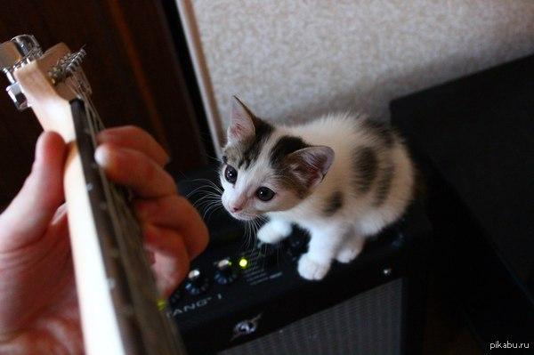 мой слушатель она всегда сидит и смотрит как я играю))  И снова котики, музыка