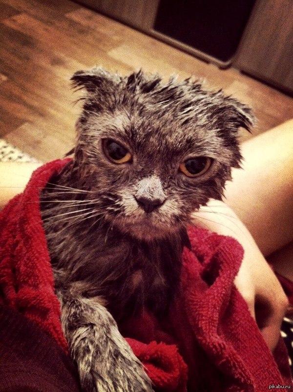 возможно это мое последнее сообщение   мне конец, помыла кошку, кот