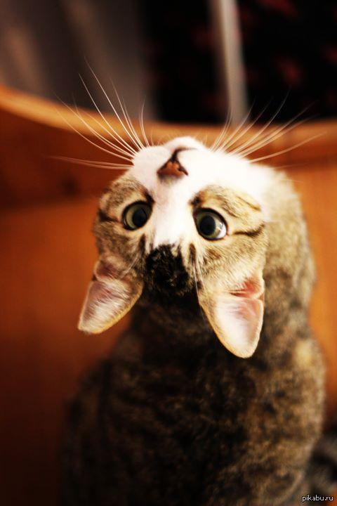 Ча надо?   кот, милота