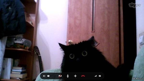 ������ ������� � �����, ��� ������ ��� ������ ������ ������� � ��� ��� �� ������������ �� ��� ��������� �� ������� �����)))))   ���, Skype, �����������