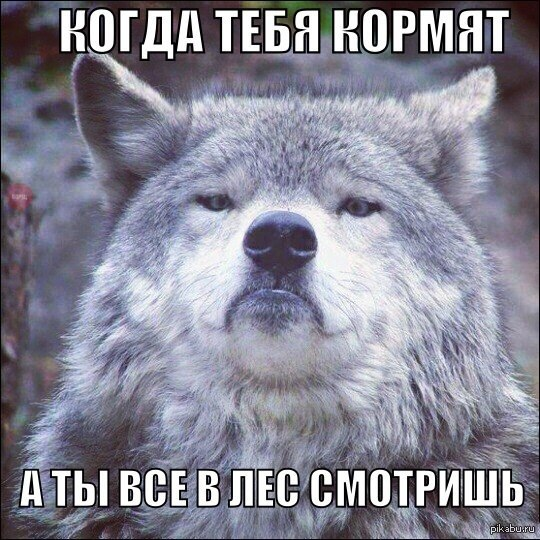 Рада планирует заслушать председателя НКРЭКУ Вовка 12 апреля, - Парубий - Цензор.НЕТ 4875