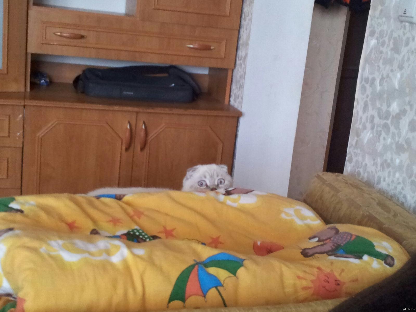 Почему кот за мной следит за