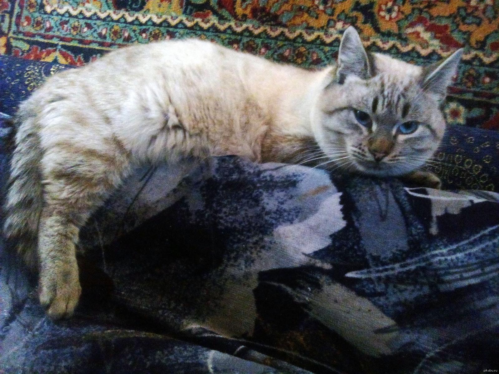 Кот зюзя