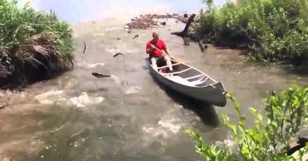 рыбалка рыба сама выпрыгивает