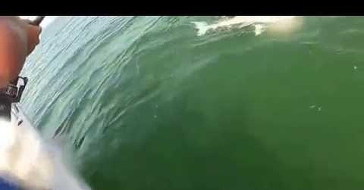 видео ловля морского окуня
